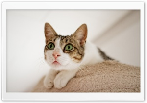Cat Looking Up HD Wide Wallpaper for Widescreen