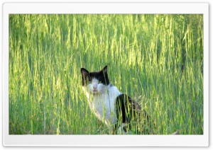 cat.MR HD Wide Wallpaper for Widescreen