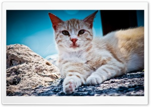Cat Naturel HD Wide Wallpaper for Widescreen