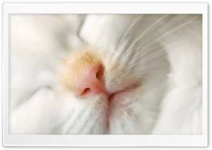 Cat Nose HD Wide Wallpaper for Widescreen