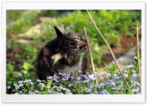 Cat Outside HD Wide Wallpaper for Widescreen