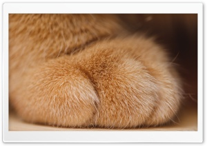 Cat Paw Ultra HD Wallpaper for 4K UHD Widescreen desktop, tablet & smartphone
