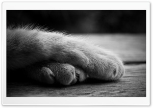 Cat Paws HD Wide Wallpaper for Widescreen