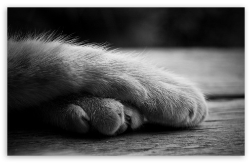 Cat Paws HD wallpaper for Wide 16:10 5:3 Widescreen WHXGA WQXGA WUXGA WXGA WGA ; HD 16:9 High Definition WQHD QWXGA 1080p 900p 720p QHD nHD ; Standard 4:3 5:4 3:2 Fullscreen UXGA XGA SVGA QSXGA SXGA DVGA HVGA HQVGA devices ( Apple PowerBook G4 iPhone 4 3G 3GS iPod Touch ) ; Tablet 1:1 ; iPad 1/2/Mini ; Mobile 4:3 5:3 3:2 16:9 5:4 - UXGA XGA SVGA WGA DVGA HVGA HQVGA devices ( Apple PowerBook G4 iPhone 4 3G 3GS iPod Touch ) WQHD QWXGA 1080p 900p 720p QHD nHD QSXGA SXGA ; Dual 5:4 QSXGA SXGA ;