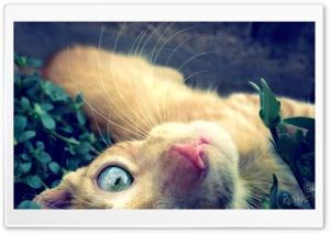 Cat Play Ultra HD Wallpaper for 4K UHD Widescreen desktop, tablet & smartphone