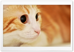 Cat Portrait HD Wide Wallpaper for Widescreen