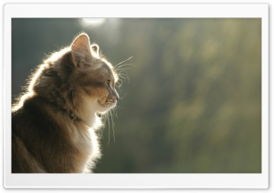Cat Profile HD Wide Wallpaper for Widescreen