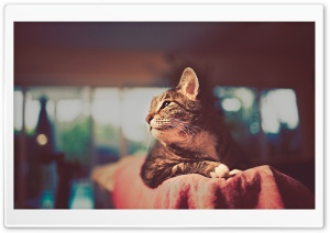 Cat Retro Photography HD Wide Wallpaper for Widescreen