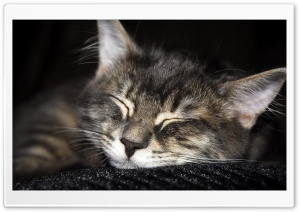 Cat Sleeping HD Wide Wallpaper for Widescreen