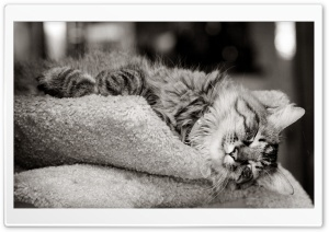 Cat Sleeping Black And White HD Wide Wallpaper for 4K UHD Widescreen desktop & smartphone