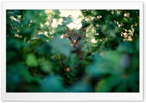 Cat Spy HD Wide Wallpaper for Widescreen