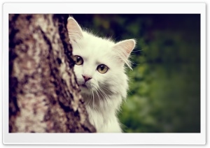 Cat Spying HD Wide Wallpaper for Widescreen