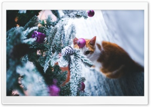 Cat under Christmas Tree HD Wide Wallpaper for 4K UHD Widescreen desktop & smartphone