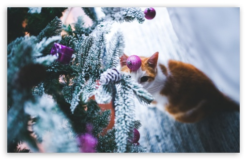 Cat Under Christmas Tree 4k Hd Desktop Wallpaper For 4k