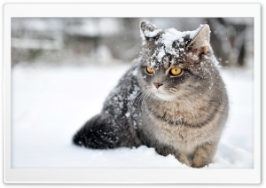 Cat Winter HD Wide Wallpaper for 4K UHD Widescreen desktop & smartphone
