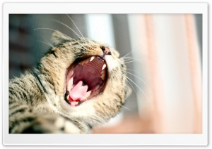 Cat Yawning Ultra HD Wallpaper for 4K UHD Widescreen desktop, tablet & smartphone