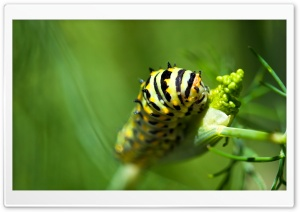Caterpillar HD Wide Wallpaper for Widescreen