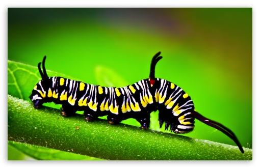 Caterpillar, Macro HD wallpaper for Wide 16:10 5:3 Widescreen WHXGA WQXGA WUXGA WXGA WGA ; HD 16:9 High Definition WQHD QWXGA 1080p 900p 720p QHD nHD ; UHD 16:9 WQHD QWXGA 1080p 900p 720p QHD nHD ; Standard 4:3 5:4 3:2 Fullscreen UXGA XGA SVGA QSXGA SXGA DVGA HVGA HQVGA devices ( Apple PowerBook G4 iPhone 4 3G 3GS iPod Touch ) ; Tablet 1:1 ; iPad 1/2/Mini ; Mobile 4:3 5:3 3:2 16:9 5:4 - UXGA XGA SVGA WGA DVGA HVGA HQVGA devices ( Apple PowerBook G4 iPhone 4 3G 3GS iPod Touch ) WQHD QWXGA 1080p 900p 720p QHD nHD QSXGA SXGA ;