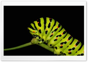 Caterpillar Walking HD Wide Wallpaper for Widescreen