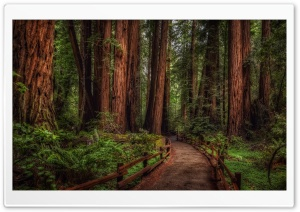 Cathedral Grove Rainforest HD Wide Wallpaper for Widescreen