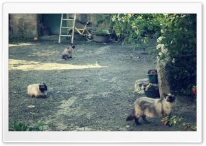 Cats Ultra HD Wallpaper for 4K UHD Widescreen desktop, tablet & smartphone