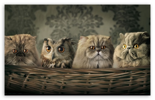 Cats And Owl HD wallpaper for Wide 16:10 5:3 Widescreen WHXGA WQXGA WUXGA WXGA WGA ; HD 16:9 High Definition WQHD QWXGA 1080p 900p 720p QHD nHD ; Standard 3:2 Fullscreen DVGA HVGA HQVGA devices ( Apple PowerBook G4 iPhone 4 3G 3GS iPod Touch ) ; iPad 1/2/Mini ; Mobile 4:3 5:3 3:2 16:9 - UXGA XGA SVGA WGA DVGA HVGA HQVGA devices ( Apple PowerBook G4 iPhone 4 3G 3GS iPod Touch ) WQHD QWXGA 1080p 900p 720p QHD nHD ;