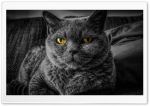 Cats Eyes Relax Ultra HD Wallpaper for 4K UHD Widescreen desktop, tablet & smartphone