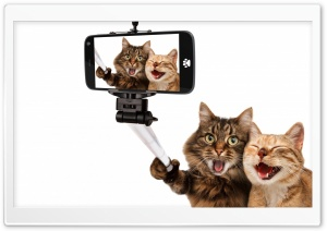Cats Humor Ultra HD Wallpaper for 4K UHD Widescreen desktop, tablet & smartphone