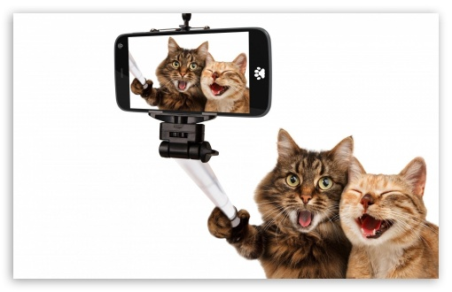 Cats Humor ❤ 4K UHD Wallpaper for Wide 16:10 5:3 Widescreen WHXGA WQXGA WUXGA WXGA WGA ; 4K UHD 16:9 Ultra High Definition 2160p 1440p 1080p 900p 720p ; Standard 4:3 5:4 3:2 Fullscreen UXGA XGA SVGA QSXGA SXGA DVGA HVGA HQVGA ( Apple PowerBook G4 iPhone 4 3G 3GS iPod Touch ) ; iPad 1/2/Mini ; Mobile 4:3 5:3 3:2 16:9 5:4 - UXGA XGA SVGA WGA DVGA HVGA HQVGA ( Apple PowerBook G4 iPhone 4 3G 3GS iPod Touch ) 2160p 1440p 1080p 900p 720p QSXGA SXGA ;