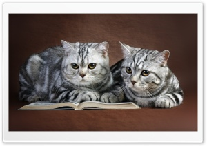 Cats On Book HD Wide Wallpaper for 4K UHD Widescreen desktop & smartphone