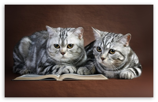 Cats On Book ❤ 4K UHD Wallpaper for Wide 16:10 5:3 Widescreen WHXGA WQXGA WUXGA WXGA WGA ; 4K UHD 16:9 Ultra High Definition 2160p 1440p 1080p 900p 720p ; Standard 4:3 5:4 3:2 Fullscreen UXGA XGA SVGA QSXGA SXGA DVGA HVGA HQVGA ( Apple PowerBook G4 iPhone 4 3G 3GS iPod Touch ) ; Tablet 1:1 ; iPad 1/2/Mini ; Mobile 4:3 5:3 3:2 16:9 5:4 - UXGA XGA SVGA WGA DVGA HVGA HQVGA ( Apple PowerBook G4 iPhone 4 3G 3GS iPod Touch ) 2160p 1440p 1080p 900p 720p QSXGA SXGA ; Dual 4:3 5:4 UXGA XGA SVGA QSXGA SXGA ;