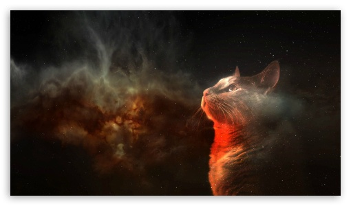 Space Wallpaper Qhd Cats Space HD wallpaper for HD High Definition WQHD QWXGA p