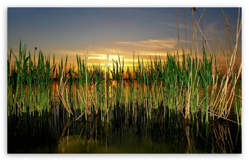 Cattails In Pond HD wallpaper for Wide 16:10 5:3 Widescreen WHXGA WQXGA WUXGA WXGA WGA ; HD 16:9 High Definition WQHD QWXGA 1080p 900p 720p QHD nHD ; Standard 4:3 5:4 3:2 Fullscreen UXGA XGA SVGA QSXGA SXGA DVGA HVGA HQVGA devices ( Apple PowerBook G4 iPhone 4 3G 3GS iPod Touch ) ; Tablet 1:1 ; iPad 1/2/Mini ; Mobile 4:3 5:3 3:2 16:9 5:4 - UXGA XGA SVGA WGA DVGA HVGA HQVGA devices ( Apple PowerBook G4 iPhone 4 3G 3GS iPod Touch ) WQHD QWXGA 1080p 900p 720p QHD nHD QSXGA SXGA ;