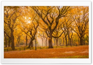 Central Park Fall Foliage HD Wide Wallpaper for Widescreen