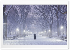 Central Park, New York City, Winter Background HD Wide Wallpaper for Widescreen