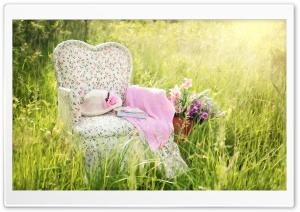 Chair in Field HD Wide Wallpaper for Widescreen