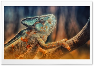 Chameleon Reptile Branch HD Wide Wallpaper for Widescreen