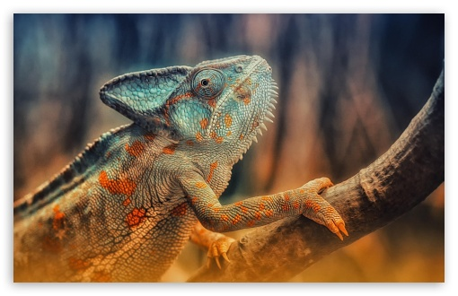 Chameleon Reptile Branch ❤ 4K UHD Wallpaper for Wide 16:10 5:3 Widescreen WHXGA WQXGA WUXGA WXGA WGA ; 4K UHD 16:9 Ultra High Definition 2160p 1440p 1080p 900p 720p ; Standard 4:3 5:4 3:2 Fullscreen UXGA XGA SVGA QSXGA SXGA DVGA HVGA HQVGA ( Apple PowerBook G4 iPhone 4 3G 3GS iPod Touch ) ; Tablet 1:1 ; iPad 1/2/Mini ; Mobile 4:3 5:3 3:2 16:9 5:4 - UXGA XGA SVGA WGA DVGA HVGA HQVGA ( Apple PowerBook G4 iPhone 4 3G 3GS iPod Touch ) 2160p 1440p 1080p 900p 720p QSXGA SXGA ;