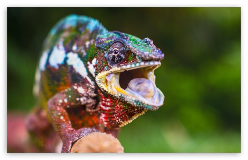 Chameleon Tongue UltraHD Wallpaper for Wide 16:10 5:3 Widescreen WHXGA WQXGA WUXGA WXGA WGA ; 8K UHD TV 16:9 Ultra High Definition 2160p 1440p 1080p 900p 720p ; UHD 16:9 2160p 1440p 1080p 900p 720p ; Standard 4:3 5:4 3:2 Fullscreen UXGA XGA SVGA QSXGA SXGA DVGA HVGA HQVGA ( Apple PowerBook G4 iPhone 4 3G 3GS iPod Touch ) ; Tablet 1:1 ; iPad 1/2/Mini ; Mobile 4:3 5:3 3:2 16:9 5:4 - UXGA XGA SVGA WGA DVGA HVGA HQVGA ( Apple PowerBook G4 iPhone 4 3G 3GS iPod Touch ) 2160p 1440p 1080p 900p 720p QSXGA SXGA ;