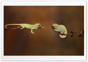 Chameleons HD Wide Wallpaper for Widescreen