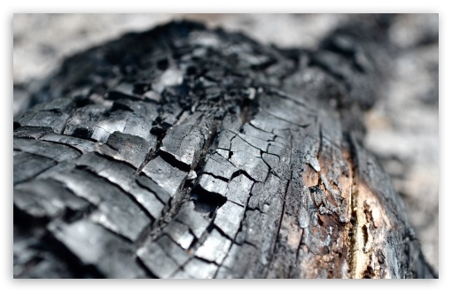 Charred Wood HD wallpaper for Wide 16:10 5:3 Widescreen WHXGA WQXGA WUXGA WXGA WGA ; HD 16:9 High Definition WQHD QWXGA 1080p 900p 720p QHD nHD ; UHD 16:9 WQHD QWXGA 1080p 900p 720p QHD nHD ; Standard 4:3 5:4 3:2 Fullscreen UXGA XGA SVGA QSXGA SXGA DVGA HVGA HQVGA devices ( Apple PowerBook G4 iPhone 4 3G 3GS iPod Touch ) ; Tablet 1:1 ; iPad 1/2/Mini ; Mobile 4:3 5:3 3:2 16:9 5:4 - UXGA XGA SVGA WGA DVGA HVGA HQVGA devices ( Apple PowerBook G4 iPhone 4 3G 3GS iPod Touch ) WQHD QWXGA 1080p 900p 720p QHD nHD QSXGA SXGA ;
