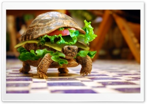 Cheese Turtle Burger By K23 HD Wide Wallpaper for 4K UHD Widescreen desktop & smartphone