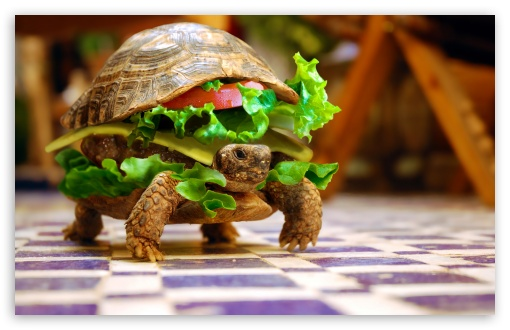 Cheese Turtle Burger By K23 HD wallpaper for Wide 16:10 5:3 Widescreen WHXGA WQXGA WUXGA WXGA WGA ; HD 16:9 High Definition WQHD QWXGA 1080p 900p 720p QHD nHD ; Standard 4:3 5:4 3:2 Fullscreen UXGA XGA SVGA QSXGA SXGA DVGA HVGA HQVGA devices ( Apple PowerBook G4 iPhone 4 3G 3GS iPod Touch ) ; Tablet 1:1 ; iPad 1/2/Mini ; Mobile 4:3 5:3 3:2 16:9 5:4 - UXGA XGA SVGA WGA DVGA HVGA HQVGA devices ( Apple PowerBook G4 iPhone 4 3G 3GS iPod Touch ) WQHD QWXGA 1080p 900p 720p QHD nHD QSXGA SXGA ;