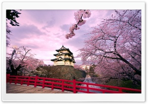 Cherry Blossoms, Japan HD Wide Wallpaper for 4K UHD Widescreen desktop & smartphone
