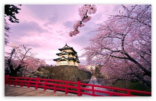 Cherry Blossoms, Japan ❤ 4K UHD Wallpaper for Wide 16:10 5:3 Widescreen WHXGA WQXGA WUXGA WXGA WGA ; 4K UHD 16:9 Ultra High Definition 2160p 1440p 1080p 900p 720p ; Standard 4:3 5:4 3:2 Fullscreen UXGA XGA SVGA QSXGA SXGA DVGA HVGA HQVGA ( Apple PowerBook G4 iPhone 4 3G 3GS iPod Touch ) ; Tablet 1:1 ; iPad 1/2/Mini ; Mobile 4:3 5:3 3:2 16:9 5:4 - UXGA XGA SVGA WGA DVGA HVGA HQVGA ( Apple PowerBook G4 iPhone 4 3G 3GS iPod Touch ) 2160p 1440p 1080p 900p 720p QSXGA SXGA ;