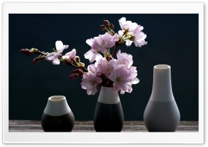 Cherry Blossoms Vase Background Ultra HD Wallpaper for 4K UHD Widescreen desktop, tablet & smartphone