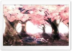 Cherry Tree Blossoms HD Wide Wallpaper for Widescreen