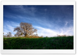 Cherry Tree HDR HD Wide Wallpaper for Widescreen