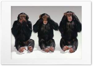 Chimpanzee Ultra HD Wallpaper for 4K UHD Widescreen desktop, tablet & smartphone