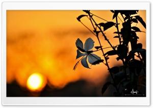China Rose Ultra HD Wallpaper for 4K UHD Widescreen desktop, tablet & smartphone
